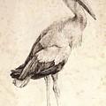 The Stork 1515 by Durer Albrecht
