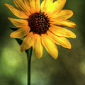 The Sunflower  by Saija  Lehtonen