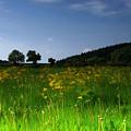 The Sunny Meadow by Angel Ciesniarska