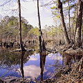 The Swamp by Melissa Messick