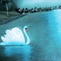 The Swan by Felix Turner