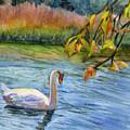 The Swan by Katherine  Berlin