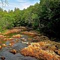 The Swift River In South Tamworth by Elizabeth Tillar