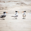 The Talking Terns by Lisa Russo