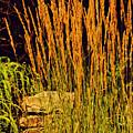 The Tall Grass by Kathleen Sartoris