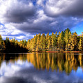 The Tamaracks by David Patterson
