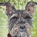 The Terrier by Shirley Sykes Bracken