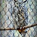 The Textured Owl by AJ Schibig