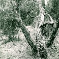 The Thinking Tree by Jennifer Bickford