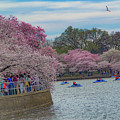 The Tidal Basin During The Washington D.c. Cherry Blossom Festival by Rick Grossman