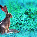 The Tortoise And The Hare . Cyan by Wingsdomain Art and Photography