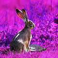 The Tortoise And The Hare . Magenta Square by Wingsdomain Art and Photography