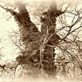 The Tree - Sepia by Brian Wallace