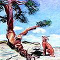 The Tree And The Bobcat by Phyllis Kaltenbach