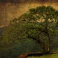 The Tree And The Range by Valmir Ribeiro