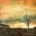 The Tree And The Roof Top by Tara Turner