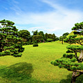 The Tree Garden by Michael Scott