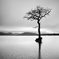 The Tree by Grant Glendinning