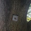 The Tree by Harrison Burd