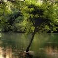 The Tree Island by Ken Gimmi