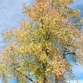 Town Tree  by Jane Merrit