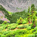 The Tree Line Near Loveland Pass In Colorado by Digital Photographic Arts