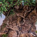 The Tree Of Life Close by Zina Stromberg