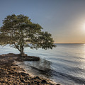 The Tree Of Life by Ronald Kotinsky