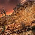 The Tree Of Zion by Ronald Kotinsky
