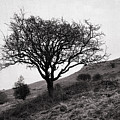 The Tree On The Fell by Jacqueline Moore