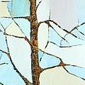 The Tree Sky Song by Judith Espinoza