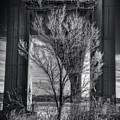 The Tree Under The Bridge by Mike Deutsch