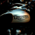 The Triumph by Steven Digman