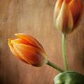 The Tulips by Jolanta Zychlinska