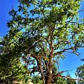 The Turtleback Tree by Lorraine Devon Wilke
