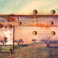 The Urban Trees by Tara Turner
