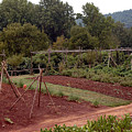 The Vegetable Garden At Monticello II by LeeAnn McLaneGoetz McLaneGoetzStudioLLCcom