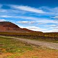 The Vineyard by Gal Gross