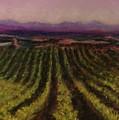 The Vineyard by Pat Snook