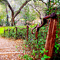 The Crooked Rail - Descanso Gardens by Glenn McCarthy Art and Photography