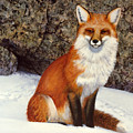 The Wait Red Fox by Frank Wilson