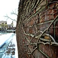 The Wall That Never Ends by Shannon Turek