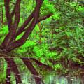 The Water Margins - Nutclough Woods by Philip Openshaw