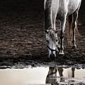 The Water Reflection by Angel  Tarantella