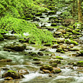The Waterfalls Of The Smokies In The Spring by Kay Brewer