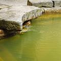 The Waters Of Bath by Christi Kraft