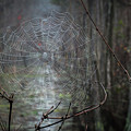 The Web by Chad Talton