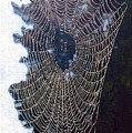 The Web by Donna Bentley