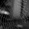 The Web by Michelle Meenawong