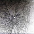 The Web We Weave by Margaret Hamilton